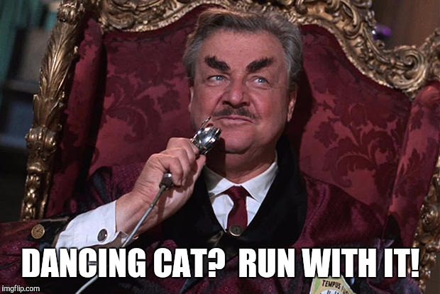 DANCING CAT?  RUN WITH IT! | made w/ Imgflip meme maker