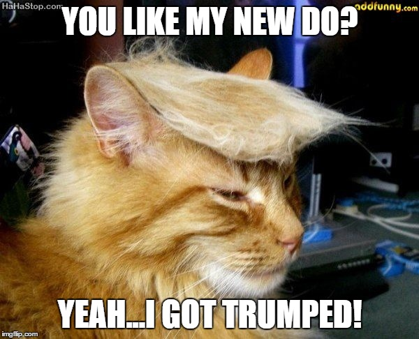 donald trump cat |  YOU LIKE MY NEW DO? YEAH...I GOT TRUMPED! | image tagged in donald trump cat | made w/ Imgflip meme maker