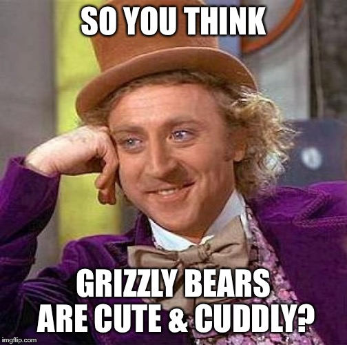 Creepy Condescending Wonka Meme | SO YOU THINK GRIZZLY BEARS ARE CUTE & CUDDLY? | image tagged in memes,creepy condescending wonka | made w/ Imgflip meme maker