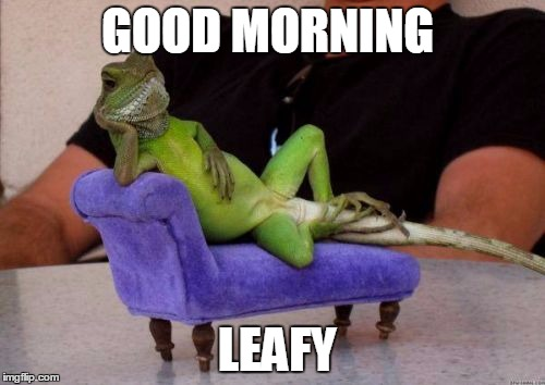 Sassy Iguana | GOOD MORNING LEAFY | image tagged in memes,sassy iguana | made w/ Imgflip meme maker