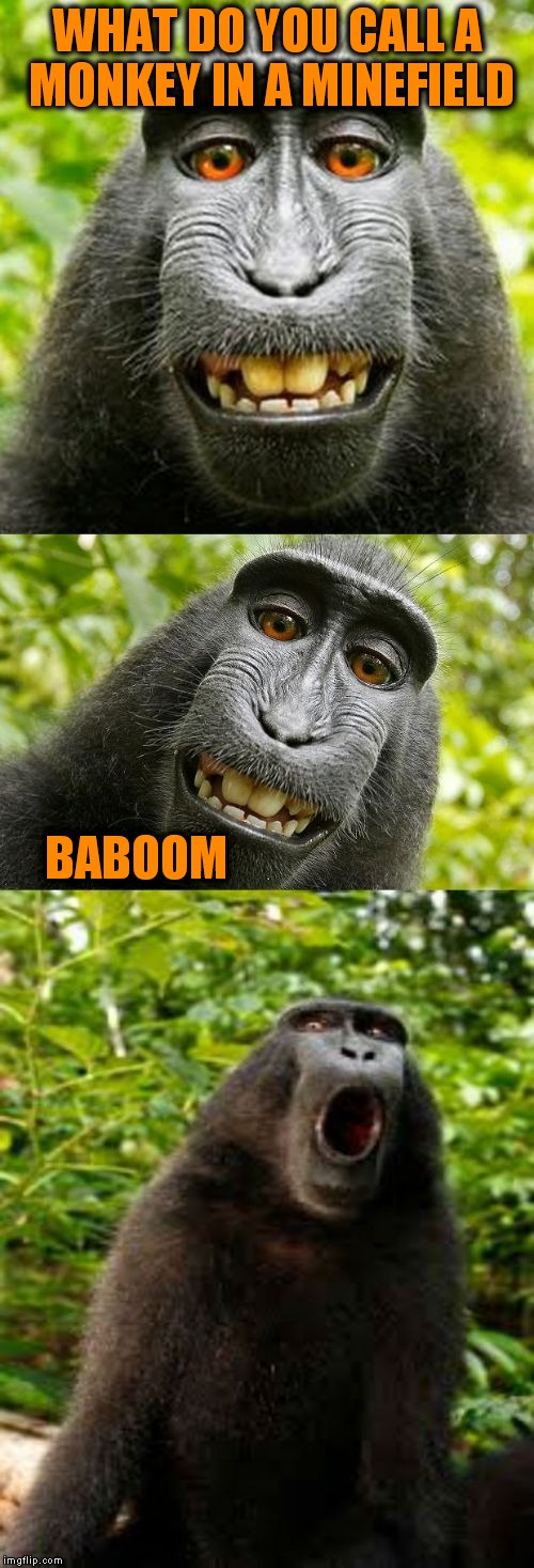 Nope not tired of making these yet | WHAT DO YOU CALL A MONKEY IN A MINEFIELD BABOOM | image tagged in bad pun monkey | made w/ Imgflip meme maker