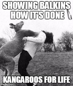SHOWING BALKINS HOW IT'S DONE KANGAROOS FOR LIFE | image tagged in kangaroo knockout | made w/ Imgflip meme maker