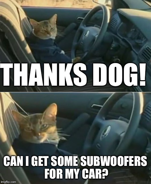 Boat Cat in Car | THANKS DOG! CAN I GET SOME SUBWOOFERS FOR MY CAR? | image tagged in boat cat in car | made w/ Imgflip meme maker