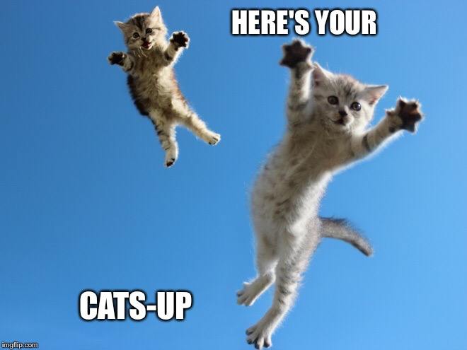 HERE'S YOUR CATS-UP | made w/ Imgflip meme maker