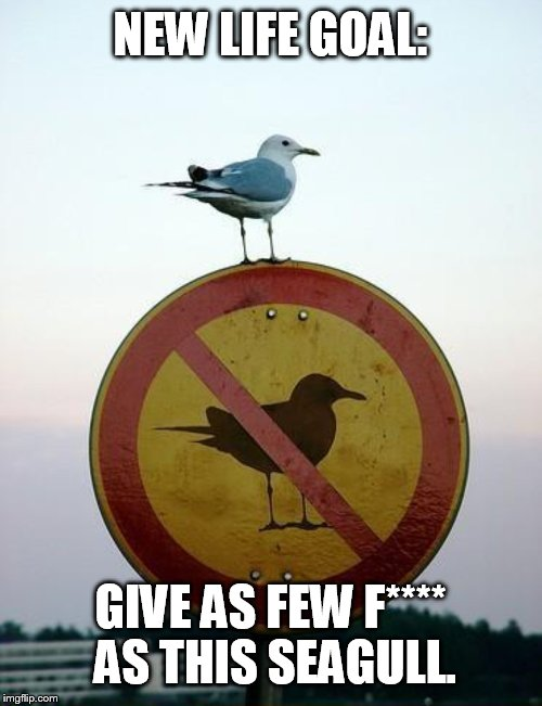 "Seagull on top of ""no seagull"" sign 