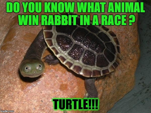 faster than a rabbit | DO YOU KNOW WHAT ANIMAL WIN RABBIT IN A RACE ? TURTLE!!! | image tagged in turtle meme | made w/ Imgflip meme maker