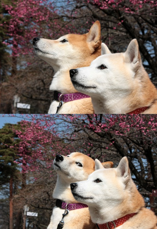 Bad pun dogs Meme Template