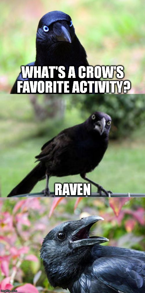 bird pun crow >`) | WHAT'S A CROW'S FAVORITE ACTIVITY? RAVEN | image tagged in bad pun crow,memes,bird pun crow,rave culture,techno,electronica | made w/ Imgflip meme maker