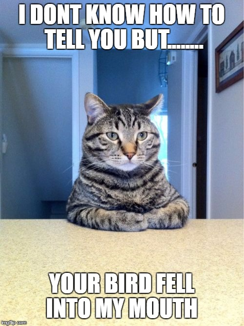 Take A Seat Cat Meme | I DONT KNOW HOW TO TELL YOU BUT........ YOUR BIRD FELL INTO MY MOUTH | image tagged in memes,take a seat cat | made w/ Imgflip meme maker