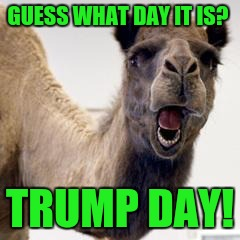 Camel | GUESS WHAT DAY IT IS? TRUMP DAY! | image tagged in camel | made w/ Imgflip meme maker