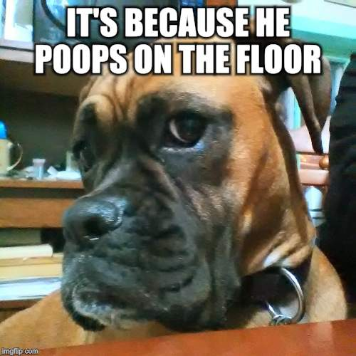 IT'S BECAUSE HE POOPS ON THE FLOOR | made w/ Imgflip meme maker