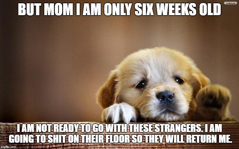 Funny Meme For Sad : Warning never google sad puppies imgflip