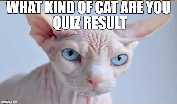 WHAT KIND OF CAT ARE YOU QUIZ RESULT | made w/ Imgflip meme maker