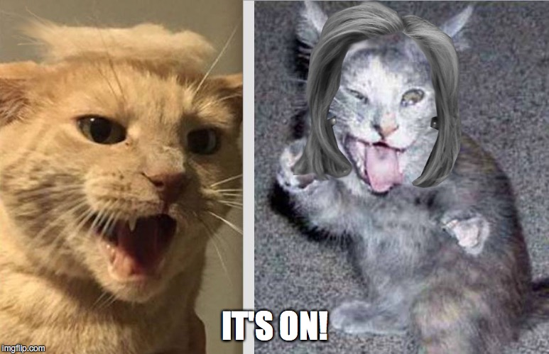 A Cat Fight For The Ages | IT'S ON! | image tagged in trump,clinton,hillary,the donald | made w/ Imgflip meme maker