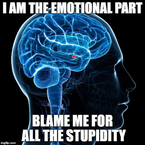 Adults Brains 94
