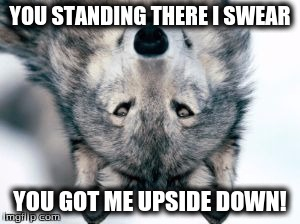 YOU STANDING THERE I SWEAR YOU GOT ME UPSIDE DOWN! | image tagged in upside down | made w/ Imgflip meme maker