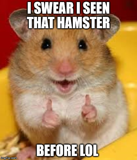 Thumbs up hamster  | I SWEAR I SEEN THAT HAMSTER BEFORE LOL | image tagged in thumbs up hamster | made w/ Imgflip meme maker