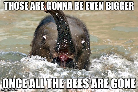 THOSE ARE GONNA BE EVEN BIGGER ONCE ALL THE BEES ARE GONE | made w/ Imgflip meme maker
