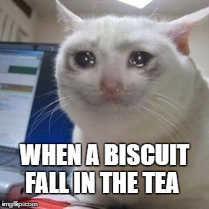 Crying cat |  WHEN A BISCUIT FALL IN THE TEA | image tagged in crying cat | made w/ Imgflip meme maker