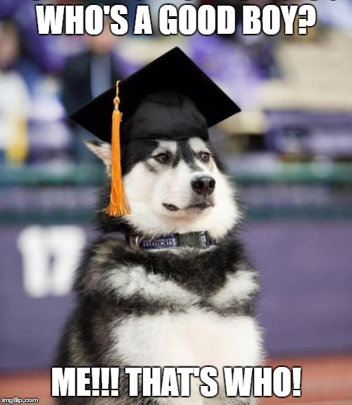 Graduate Dog | WHO'S A GOOD BOY? ME!!! THAT'S WHO! | image tagged in graduate dog | made w/ Imgflip meme maker