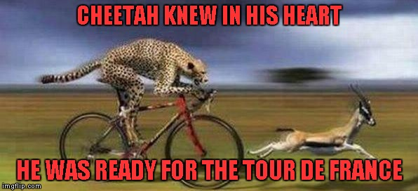 What would the world be like if animals had the use of technology? | CHEETAH KNEW IN HIS HEART HE WAS READY FOR THE TOUR DE FRANCE | image tagged in cheetah on bike,memes,funny animals,tour de france,animals,funny | made w/ Imgflip meme maker