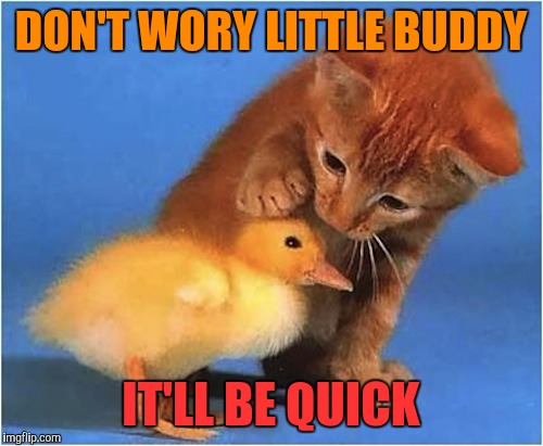 Reassurance is always nice... | DON'T WORY LITTLE BUDDY IT'LL BE QUICK | image tagged in memes,funny,cats,ducks | made w/ Imgflip meme maker