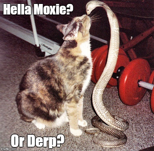Hella Moxie? Or Derp? | image tagged in cat vs snake,say that again i dare you,you talkin' to me,derp,moxie,chutzpah | made w/ Imgflip meme maker