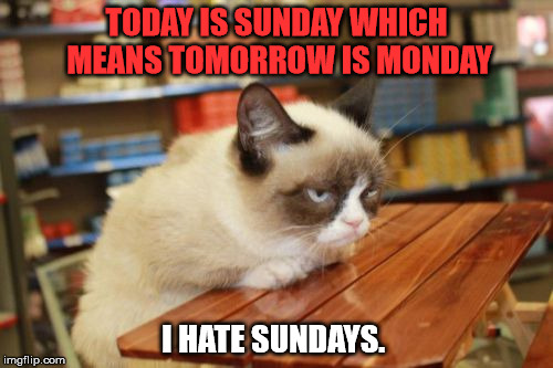 Grumpy Cat Monday Meme Shocking Pictures