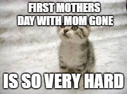 mom passed away last august . this is tough . enjoy her day with her those who are lucky to have her still here | FIRST MOTHERS DAY WITH MOM GONE IS SO VERY HARD | image tagged in memes,sad cat | made w/ Imgflip meme maker