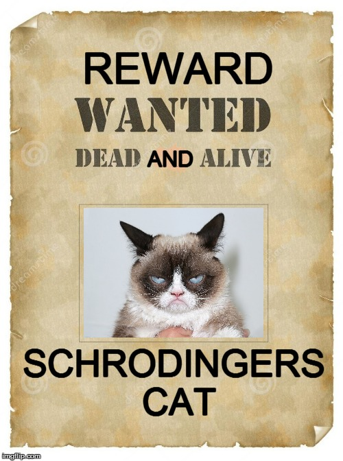 wanted | REWARD AND SCHRODINGERS CAT | image tagged in funny | made w/ Imgflip meme maker
