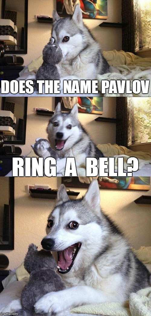 Bad Pun Dog Meme | DOES THE NAME PAVLOV RING  A  BELL? | image tagged in funny | made w/ Imgflip meme maker