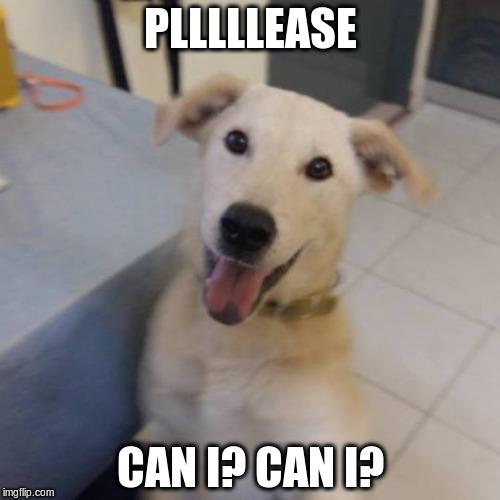 Funny Dog Meme Generator : Bearmoji can i imgflip