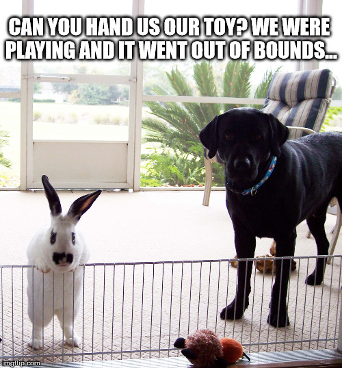 Hey, a little help over here... |  CAN YOU HAND US OUR TOY? WE WERE PLAYING AND IT WENT OUT OF BOUNDS... | image tagged in bunny humor,labs,bunny | made w/ Imgflip meme maker