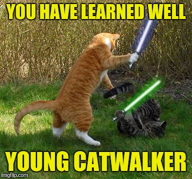 YOU HAVE LEARNED WELL YOUNG CATWALKER | made w/ Imgflip meme maker
