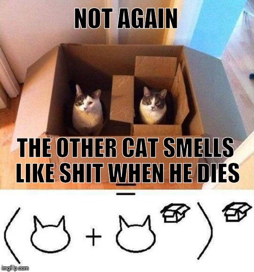 NOT AGAIN THE OTHER CAT SMELLS LIKE SHIT WHEN HE DIES | made w/ Imgflip meme maker