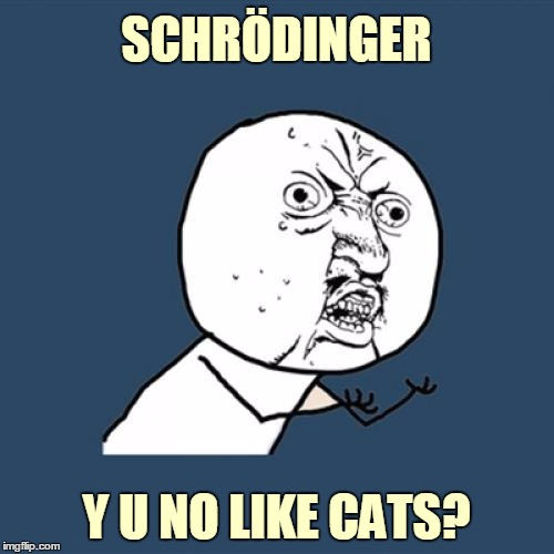 Y U No Meme | SCHRÖDINGER Y U NO LIKE CATS? | image tagged in memes,y u no | made w/ Imgflip meme maker