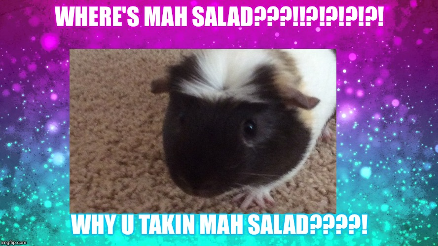 Don't Mess With A Piggie's Salad |  WHERE'S MAH SALAD???!!?!?!?!?! WHY U TAKIN MAH SALAD????! | image tagged in guinea pig | made w/ Imgflip meme maker