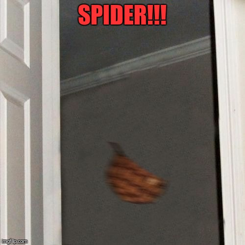 Everybody hates spiders.  | SPIDER!!! | image tagged in scumbag steve gone,sewmyeyesshut,memes,funny,spiders | made w/ Imgflip meme maker