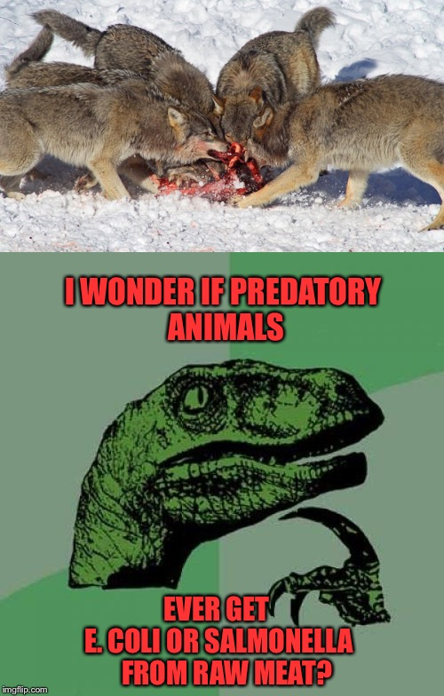 Ever wonder? |  I WONDER IF PREDATORY ANIMALS; EVER GET         E. COLI OR SALMONELLA         FROM RAW MEAT? | image tagged in philosoraptor,predator,e coli,salmonella,animals,memes | made w/ Imgflip meme maker