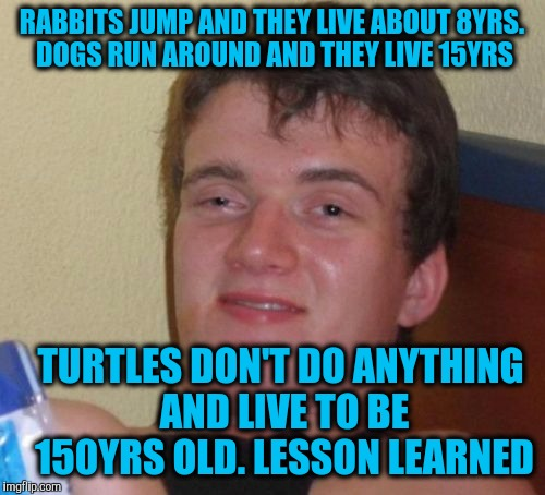 10 Guy Meme | RABBITS JUMP AND THEY LIVE ABOUT 8YRS. DOGS RUN AROUND AND THEY LIVE 15YRS TURTLES DON'T DO ANYTHING AND LIVE TO BE 150YRS OLD. LESSON LEARN | image tagged in memes,10 guy | made w/ Imgflip meme maker