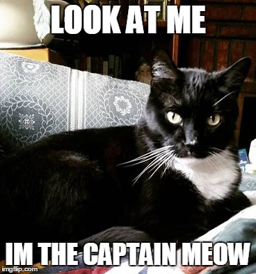 look at me |  LOOK AT ME; IM THE CAPTAIN MEOW | image tagged in captain phillips - i'm the captain now,funny cat memes,funny cat,memes | made w/ Imgflip meme maker