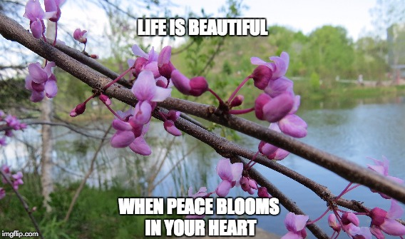 peaceful heart | LIFE IS BEAUTIFUL WHEN PEACE BLOOMS IN YOUR HEART | image tagged in peace | made w/ Imgflip meme maker