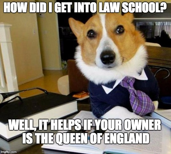 how to get a school dog