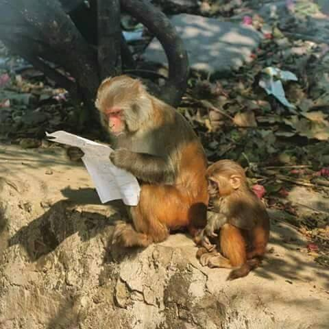 Monkey Reading A Paper Blank Template Imgflip