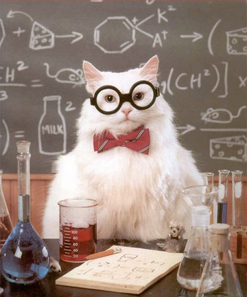14afva science cat physics blank template imgflip
