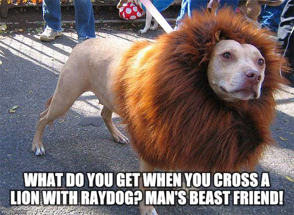 WHAT DO YOU GET WHEN YOU CROSS A LION WITH RAYDOG? MAN'S BEAST FRIEND! | made w/ Imgflip meme maker