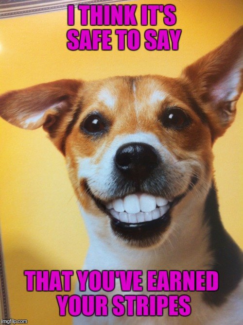 Dog Grinning | I THINK IT'S SAFE TO SAY THAT YOU'VE EARNED YOUR STRIPES | image tagged in dog grinning | made w/ Imgflip meme maker
