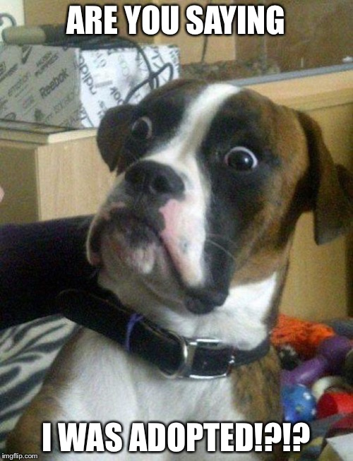 14e5db surprised boxer meme generator imgflip