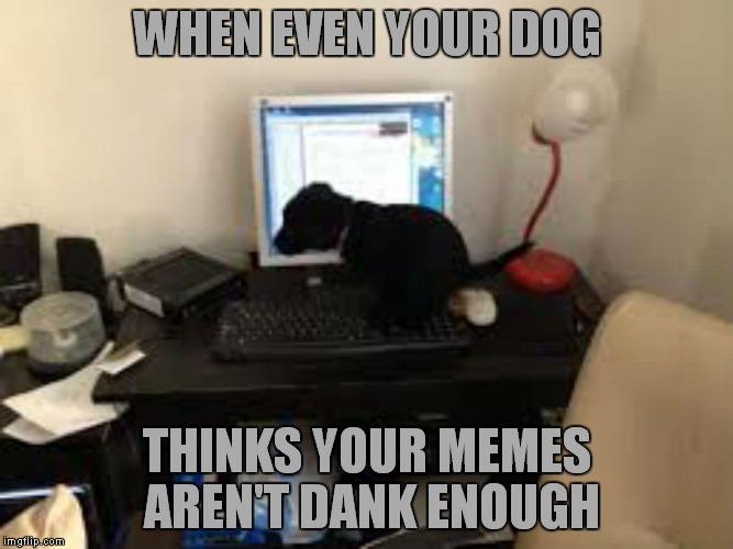 Bad dog? Or bad memes? | WHEN EVEN YOUR DOG THINKS YOUR MEMES AREN'T DANK ENOUGH | image tagged in dankey kang | made w/ Imgflip meme maker
