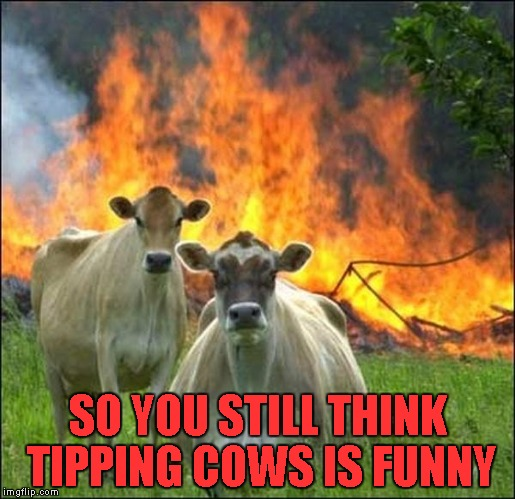 When cows fight back! | SO YOU STILL THINK TIPPING COWS IS FUNNY | image tagged in memes,evil cows,funny animals,funny,disaster cows | made w/ Imgflip meme maker